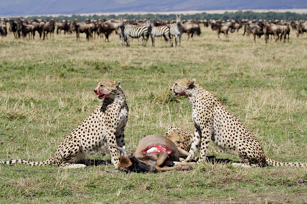 V Serengeti si všichni přijdou na své...