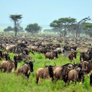 4-Days Serengeti Migration Safari
