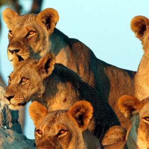 5 Day Tanzania Wildlife Safari Family Tour