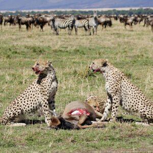6-Days Serengeti Migration Safari