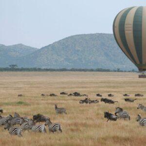8-Days Serengeti Migration Safari