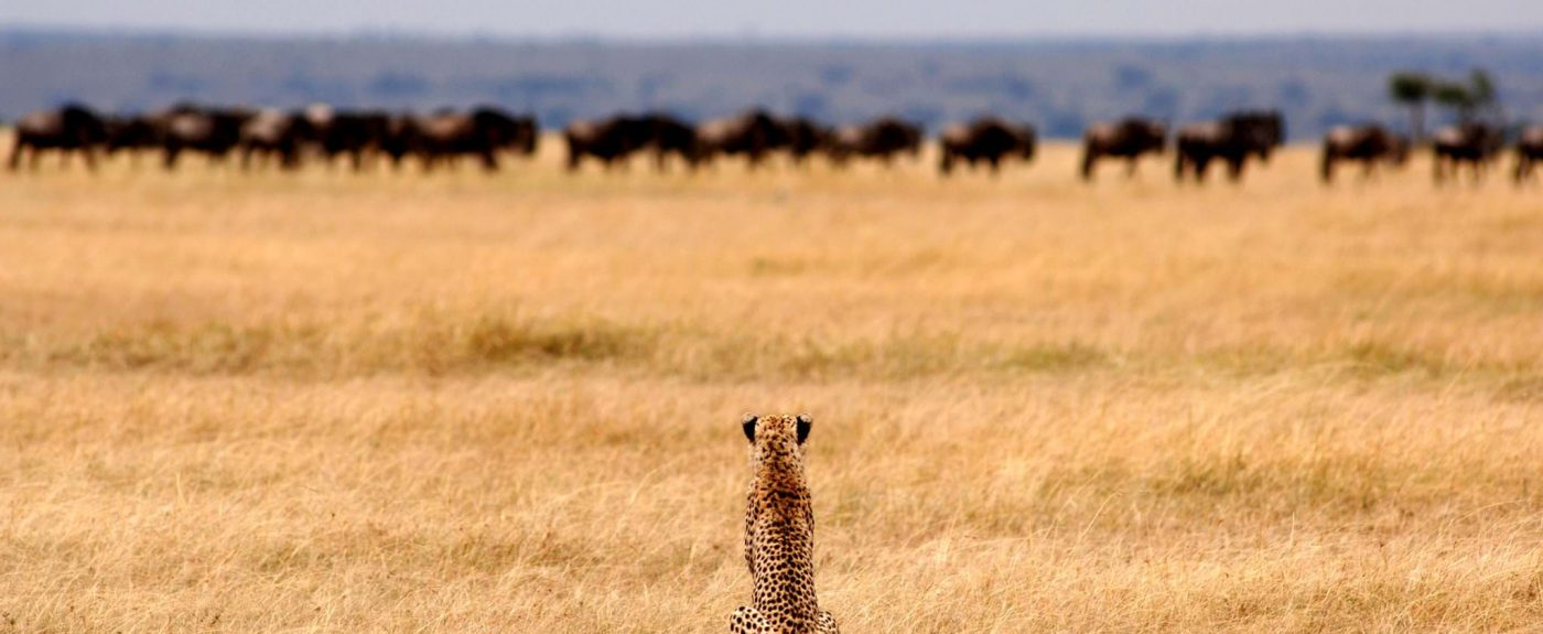 EXPERIENCE SERENGETI PARK AT ITS WILDEST