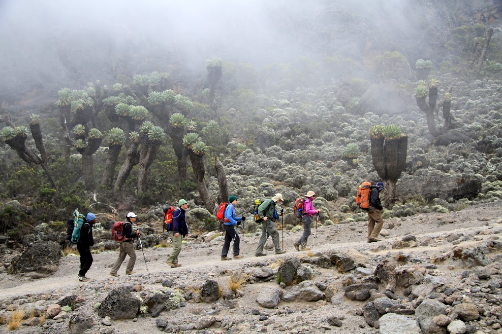 Lemosho Route 7 Days Kilimanjaro Climbing