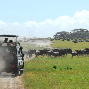 Movement of Serengeti Wildebeest Migration