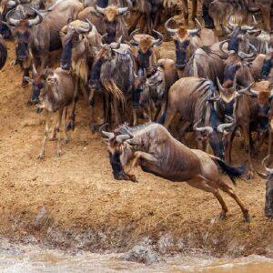 Northern Serengeti Migration Safari