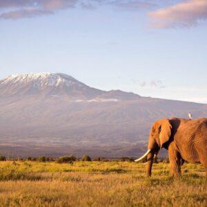 Rongai Route 6 Days Kilimanjaro Climbing