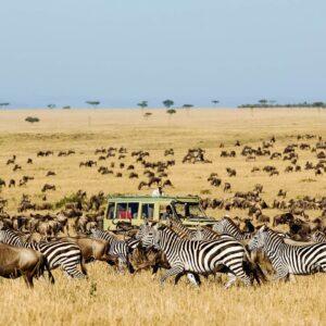 Serengeti Voyage 6 Days Safari