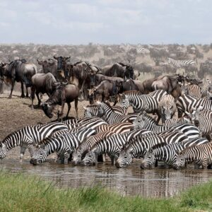 Serengeti Wilds 10-Day Wildebeest Migration