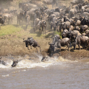 Tanzania National Parks and Reserves