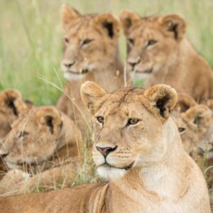 Tented Lodge Tanzania Expedition 6 Days